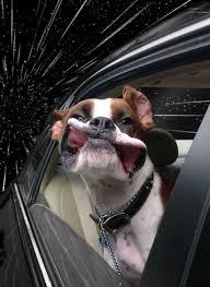 cane fuori dal finestrino dell'auto