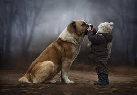 Bambino e cane insieme
