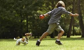 gioco pallina