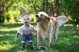 gioco bimbo cane acqua