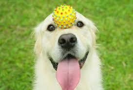 gioco pallina cane