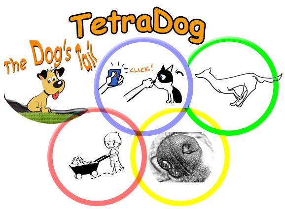 TetraDog