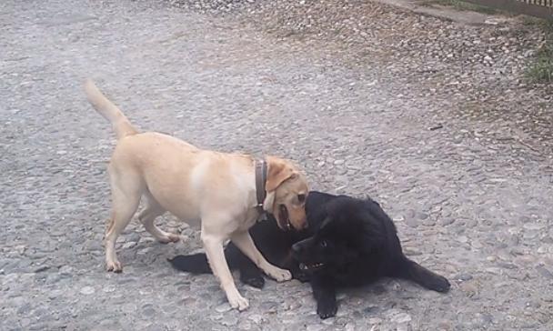 cucciolo e adulto