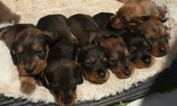 cuccioli 3 settimane
