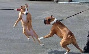 al guinzaglio cani liberi