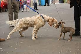 incontro al guinzaglio tra cani