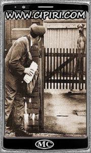 Cane dietro cancello vede postino