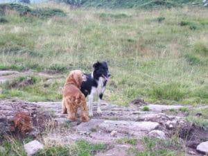 unam incontro cane