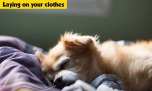 cane dorme sui vestiti