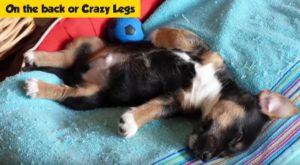 cane che dorme sulla schiena