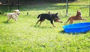 socializzazione cuccioli